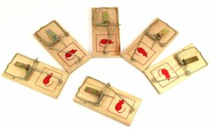 The best mouse traps in Canada in 2021: getting rid of pests